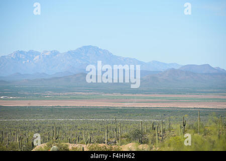 Arizona, Saguaro National Park - Stock Image