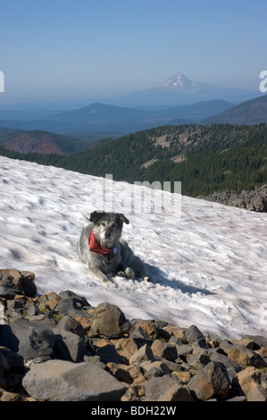 Mount Jefferson from Park Butte with Dog - Stock Image