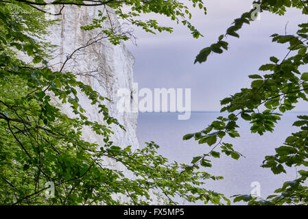 White cliffs at Moen Denmark with green leaves and gray cloudy weather - Stock Image
