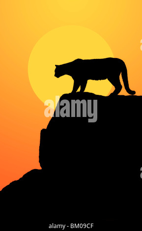 Mountain lion in silhouette on the rocks at sunset - Stock Image
