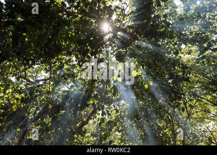 Piaraçu village (Aldeia Piaraçu), Mato Grosso State, Brazil. A sunburst through the trees of the forest. - Stock Image