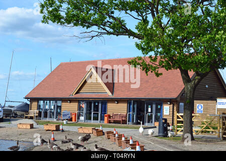 Wild geese outside the Visitor Centre at South Hanningfield Reservoir, between Billericay and Chelmsford in Essex - Stock Image