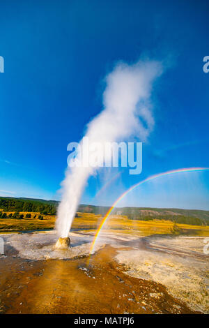 Beehive Geyser erupting and rainbow,, Yellowstone National park, Wyoming, Upper Geyser Basin - Stock Image