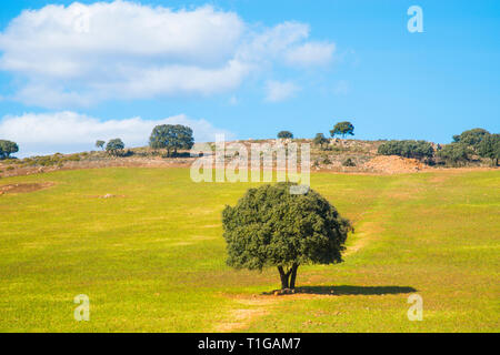 Meadow. Toledo, Spain. - Stock Image