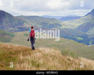 A female hiker walking off the summit of Great Borne towards Loweswater Fell in the English Lake District, UK. - Stock Image
