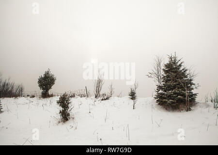 Roadside Evergreens and Small Trees on Overcast Day in Winter - Stock Image