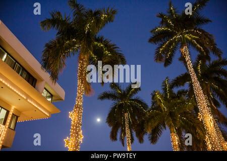 Miami Beach Florida City Hall palm trees dusk Christmas lights winter holiday season seasonal decoration star frond tropical moo - Stock Image