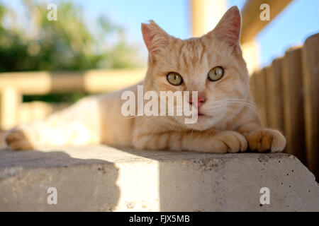 Portrait Of Cat Sitting On Seat In Gazebo - Stock Image