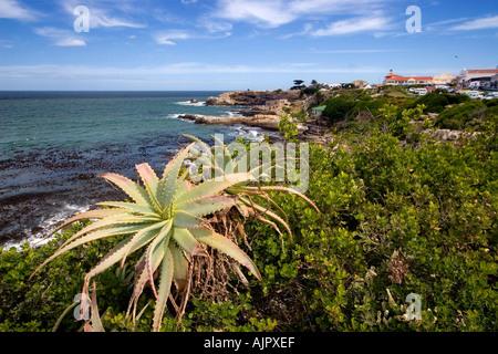 south africa western cape Hermanus coastline  - Stock Image