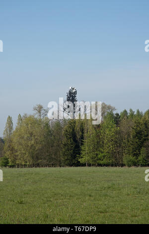 disguised mobile phone mast Buckinghamshire - Stock Image