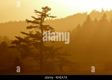A late autumn afternoon sun shower mist over Apohaqui, near Sussex, New Brunswick, Canada. - Stock Image