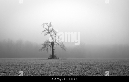 Black and white photo of a solitary tree in a field on a foggy winter day. - Stock Image