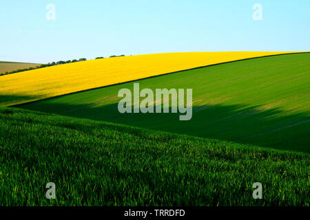 Sussex rolling hills with rape field crops and green early wheat in the long rolling fields, the light is low casting high lights and long shadows on - Stock Image