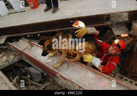 A canine rescue worker and his handler emerge from the pile of rubble at Ground Zero. Sept 21, 2001. World Trade - Stock Image
