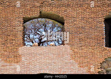 Tree through brick wall window - Fort Jefferson - Dry Tortugas - Stock Image