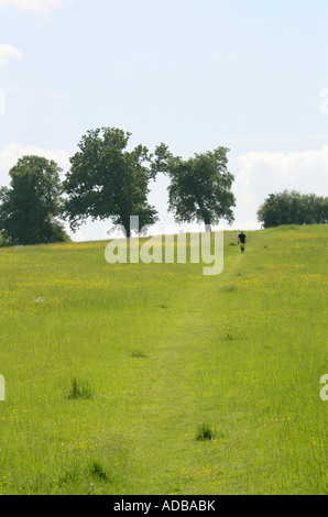 Chilterns Countryside Landscape with Oak Trees and Rambler - Stock Image