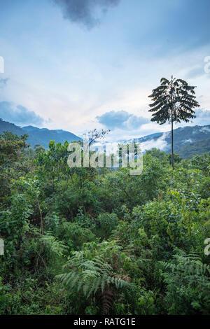 view of Bwindi Impenetrable National Forest Park, Uganda, Africa - Stock Image