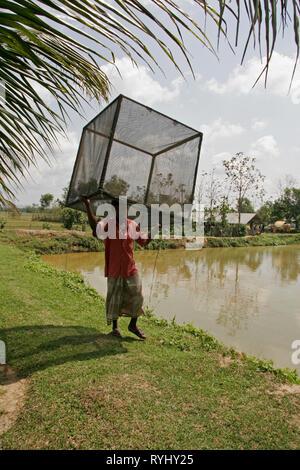 BANGLADESH Man carrying boxed net, Fish hatchery employing scientific methods at Haluaghat, Mymensingh region photo by Sean Sprague - Stock Image