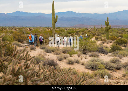 Hiking, McDowell Mountain Regional Park, Near Fountain Hills and East of Phoenix, Arizona. - Stock Image