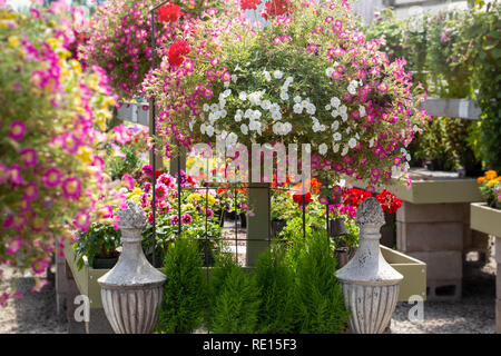 Flower baskets displayed for sale in a summertime garden center - Stock Image