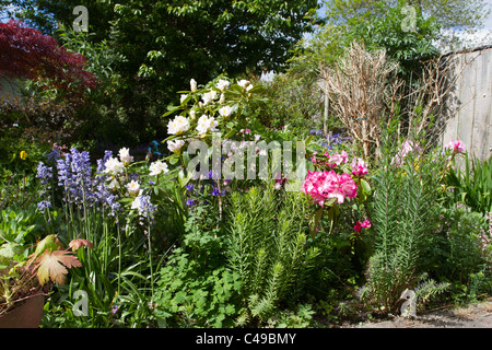 English country garden with riot of blooms late spring early summer. - Stock Image