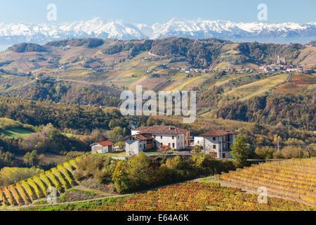 Vineyards, nr Alba, Langhe, Piedmont (or Piemonte or Piedmonte), Italy - Stock Image