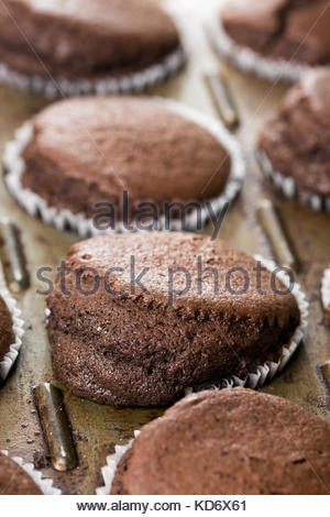 Selective focus on fresh baked chocolate cup cakes in the baking tray. - Stock Image