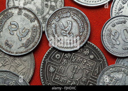 Coins of Nepal. Nepalese five paisa coin. - Stock Image