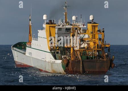 "Hull registered factory ship ""Cornelis Vrolijk"" fishing for mackerel in Saint Magnus Bay on the west coast of Shetland. - Stock Image"