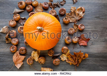 Pumpkin with medlar fruit and leaves on a dark wood background - Stock Image