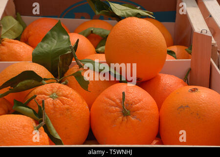ripe and tasty oranges for sale, juicy oranges organically grown lie in wooden boxes on market - Stock Image