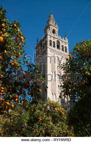 The Giralda bell tower Seville Cathedral - Stock Image
