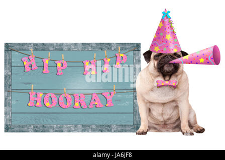 cute pug puppy dog with pink party hat and horn and old  blue wooden sign with festive hip hip hooray banner, isolated - Stock Image
