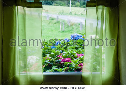View from a French window through green net curtains into a French Garden and field in Mantilly, Orne, France, Europe - Stock Image