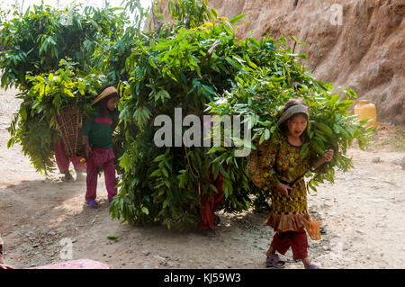 Girls carrying fodder back to their village near Shivapuri, Nepal - Stock Image