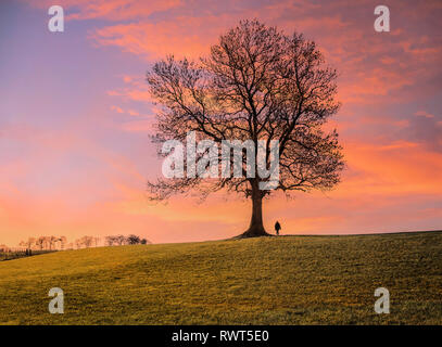 Sunset clouds behind a single leafless tree with a single person silhouetted against a dramatic sky. - Stock Image