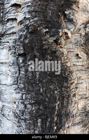 This fluid wood seems  black river..... But it is just a trunk. Still the nerves and colors are really suggesting. - Stock Image