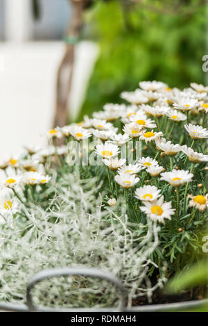 Flowers and plants in garden - Stock Image