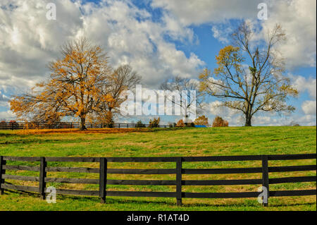 Autumn colors in Fall - Stock Image