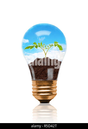 Young seedling growing out of soil inside light bulb. Concept of new life or beginning; environmental conservation or green movement. Isolated on whit - Stock Image