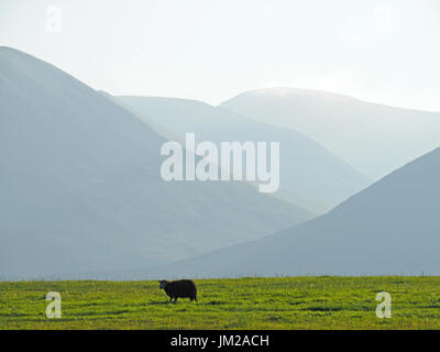 Lake District, UK. 25th July, 2017. A Herdwick sheep looks up from grazing in front of receding hills in evening light in the quintessentially English Lake District Credit: Steve Holroyd/Alamy Live News - Stock Image