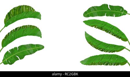 Set of bright green leaves of banana palm. Tropical theme. Colorful graphic design for print, image or postcard. illustration - Stock Image