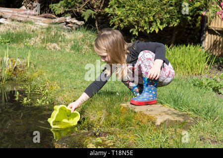 young girl pond dipping in garden wildlife pond removing tadpoles in children's bucket, three years old. UK. March. - Stock Image