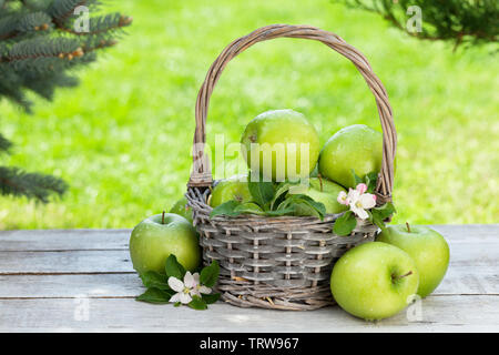 Fresh garden green apples in basket. On outdoor table with copy space for your text - Stock Image