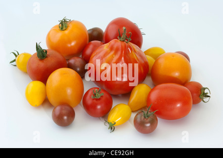 Tomato (Lycopersicon esculentum), fruit of different varieties. Studio picture against a white background. - Stock Image
