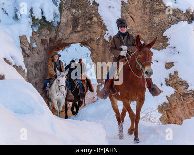 Mules & wranglers pass through one of the arch tunnels on the Bright Angel Trail. Grand Canyon National Park, Arizona. - Stock Image