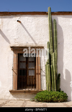 Window and organ cactus in the 19th century mining town of Mineral de Pozos, Guanajuato state, Mexico - Stock Image