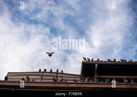 Pigeons on a building in a square with Sebilj fountain, Sarajevo Old Town, Bosnia and Herzegovina - Stock Image