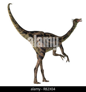 Gallimimus Dinosaur Tail - Gallimimus was a omnivorous theropod dinosaur that lived in Mongolia during the Cretaceous Period. - Stock Image