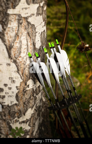 Close-up of bows leaning on tree trunk - Stock Image